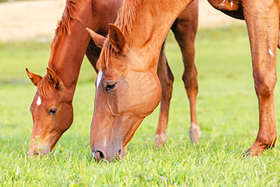 How Kentucky sales and use taxes apply to manufacturing and equine industries