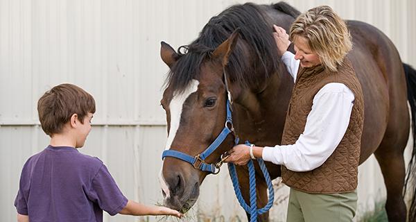 Horse Donation Photo